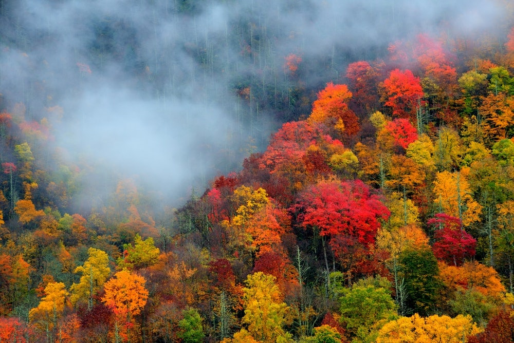 Amazing-fall-colors-in-the-Smoky-Mountains.jpg