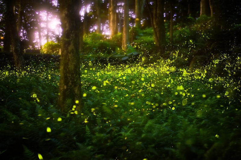 Fireflies-Small.jpg