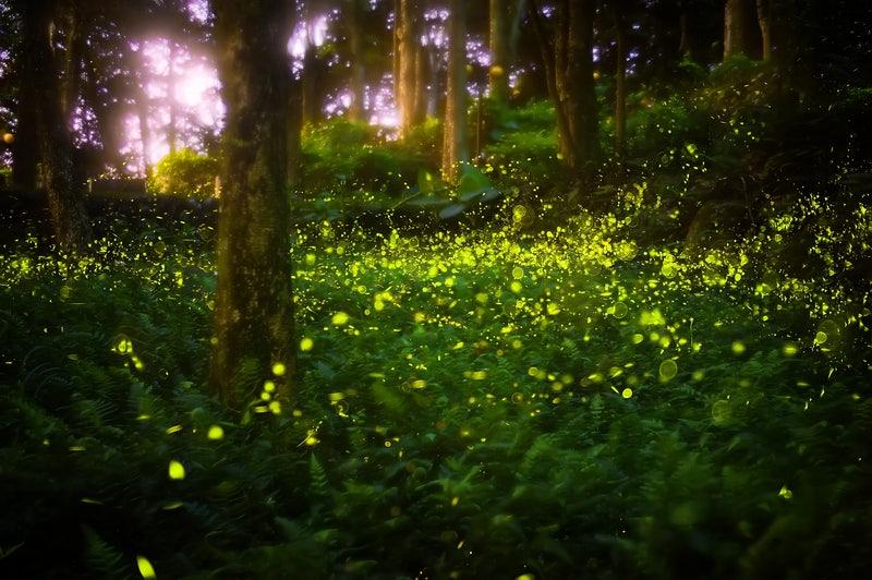 Fireflies-Small.jpg