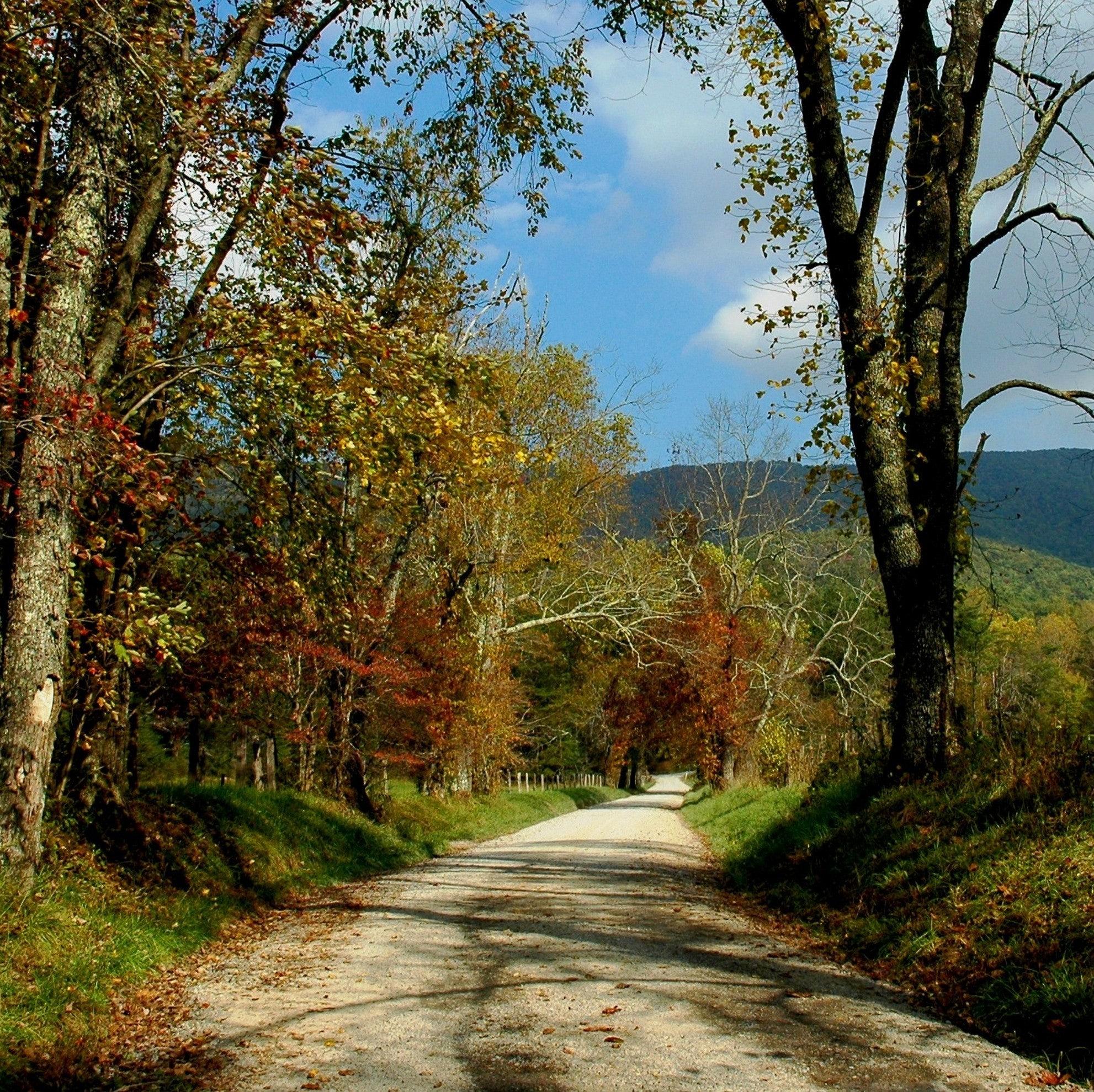 autumnsquares0002.jpg
